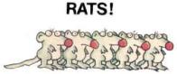 RATS NEW